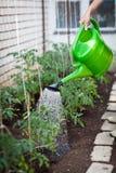 Little organic garden. Little organic/bio/permaculture garden Stock Images