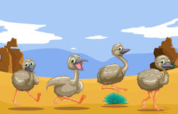 Little ostriches running in the desert Royalty Free Stock Images