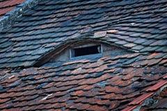 Little Owl, Athene noctua, bird in old roof tile. Urban wildlife, owl on roof chimney. Bird with yellow eyes, Czech. Wildlife scen Stock Image