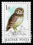 Little owl Athene noctua, series, circa 1984 Royalty Free Stock Photo