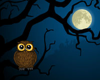 Little owl on branch and full moon Stock Photos