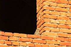 Little owl on the brick wall Royalty Free Stock Photo