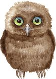 Little owl drawing by watercolor Stock Photos