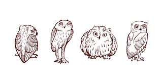 Little Owl Set Royalty Free Stock Photos