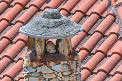Little owl on a stone chimney. A little owl (Athene noctua) roosted in a stone chimney Royalty Free Stock Image