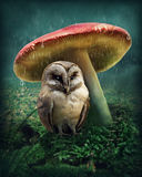 Little owl under mushroom Stock Photography