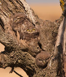 Little Owlets: three brothers Royalty Free Stock Image