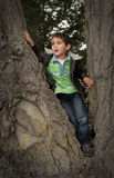 little Pacific Islander boy siting in tree Royalty Free Stock Photos