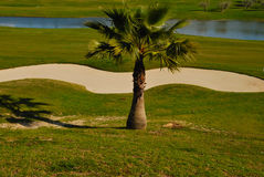 Little palm on golf course. Golf course, located  just a 10 minutes drive of the center of Seville, in the zone of the Aljarafe Stock Photos