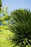 Little palm tree stock photography