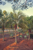 Little palm trees in the garden Royalty Free Stock Photo