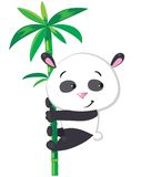 Little panda on bamboo Stock Photos