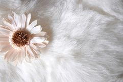 Little Flower on White Puffy Background Royalty Free Stock Images