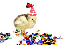 Little party chicken. Having a party Royalty Free Stock Image