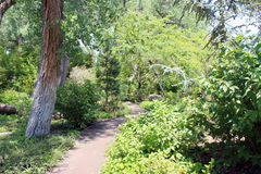 Little Path in Woods. A little path wonders through the woods at the Albuquerque zoo Royalty Free Stock Photos