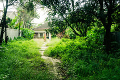 A little pathway in the middle of grass yard direct to a house building surrounding by big trees photo taken in Depok Royalty Free Stock Photography