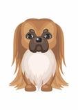 Little Pekingese dog Royalty Free Stock Image