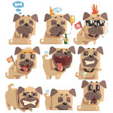 Little Pet Pug Dog Puppy With Collar Collection Of Emoji Facial Expressions And Activities Cartoon Illustrations. Cute Small Animal Emoticons In Stylized royalty free illustration