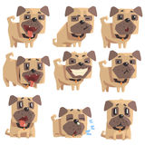 Little Pet Pug Dog Puppy With Collar Set Of Emoji Facial Expressions And Activities Cartoon Illustrations Royalty Free Stock Photos
