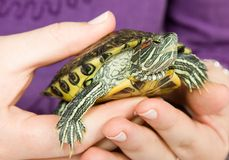 Little pet turtle Stock Image