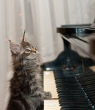 Little pianist Royalty Free Stock Image