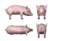 Little pig Royalty Free Stock Photos