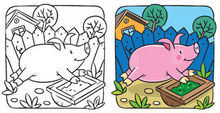 Little pig coloring book Stock Photos