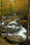 Little Pigeon River på Tremont i Great Smoky Mountains Royaltyfria Foton