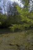 Little Pigeon River, Spring. Spring Scenics, Little Pigeon River, Great Smoky Mtns National Park stock photos