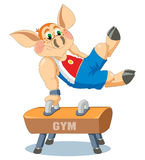 A little piglet is gymnast Royalty Free Stock Photo