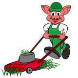 Little pigs with lawn mower. In the garden Royalty Free Stock Photo