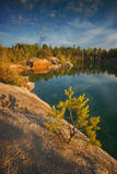 Little pine tree on a lake Stock Image