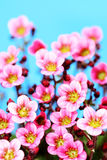 Little pink Stock Images