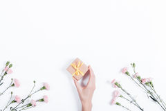 Little pink carnation on a white background and a woman's hand w Royalty Free Stock Photo