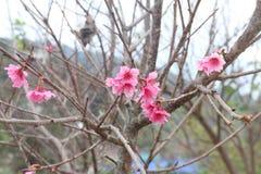 Background. Little pink flower stock photos