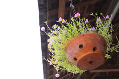 Little pink flower in clay pot hanging Royalty Free Stock Photography