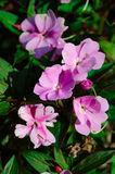 Little pink flowers. With leafs Stock Image