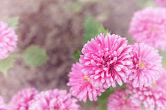 Little pink flowers, watercolor on canvas texture Stock Photography