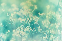 Little pink grass wild flower  pastel color filter. Effect  ,Abstract spring nature background stock photography