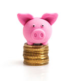 Little pink pig  on coins. Isolated on white Royalty Free Stock Photo