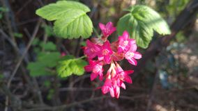Little pink red flowers in dappled sunshine Royalty Free Stock Images