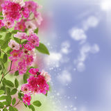 Little pink roses. Royalty Free Stock Images