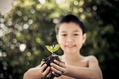Little plan in boy hands. Dark color tone. Selective focus on plant, Child holding young seedling plant in hands tree bokeh background. Concept Earth day Royalty Free Stock Images