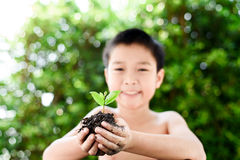 Little plan in boy hands. Selective focus on plant, Child holding young seedling plant in hands tree bokeh background. Concept Earth day Royalty Free Stock Images