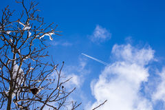 Little plane flying up high in the sky Royalty Free Stock Photography