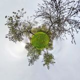 Little planet spherical panorama 360 degrees. Spherical aerial view  in blooming apple garden orchard with dandelions. Curvature stock photography