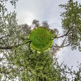 Little planet spherical panorama 360 degrees. Spherical aerial view  in blooming apple garden orchard with dandelions. Curvature royalty free stock photos