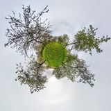 Little planet spherical panorama 360 degrees. Spherical aerial view  in blooming apple garden orchard with dandelions. Curvature royalty free illustration