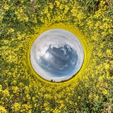 Little planet spherical panorama 360 degrees. Spherical aerial view  in blooming in field rapseed canola colza. Curvature of space stock photos