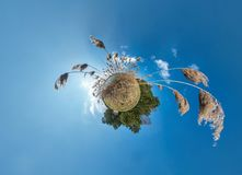 Little planet transformation with curvature of space. Spherical aerial 360 view panorama on the shore of lake with thickets of. Reeds in sunny summer stock photos